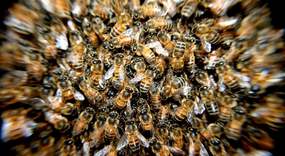 pszczoły ul rój FREE 1200_660.jpg