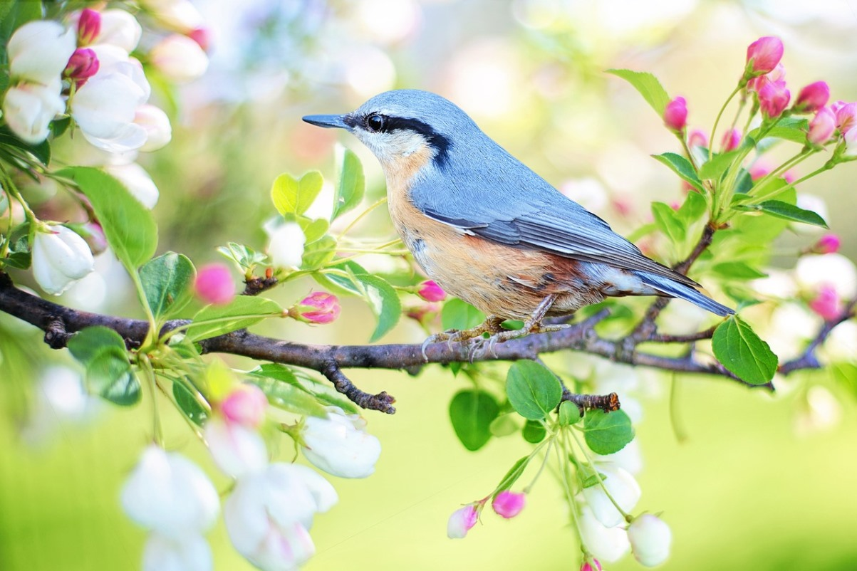 Jaki Jest Najpiękniejszy Ptak W Polsce Trójka Polskieradiopl