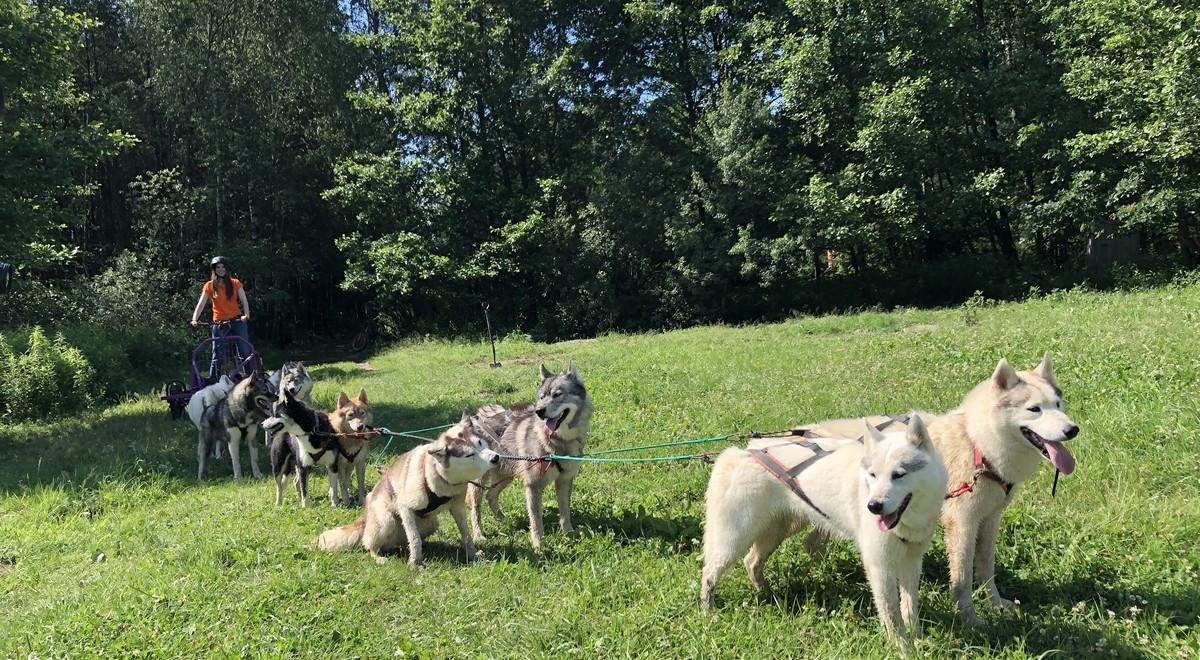 """Hodowla niezwykłych psów i wyścigi psich zaprzęgów...""""Lato z Radiem"""" we Władzinie"""