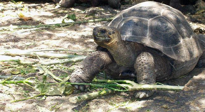 Galapagos – wyspy żółwia - Historia - polskieradio24 pl