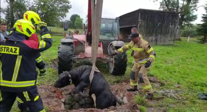 Braniewo firefighters taking the bull by the horns