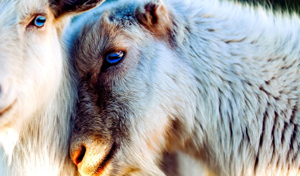 shutterstock kozy miłość zwierzęta 1200.jpg