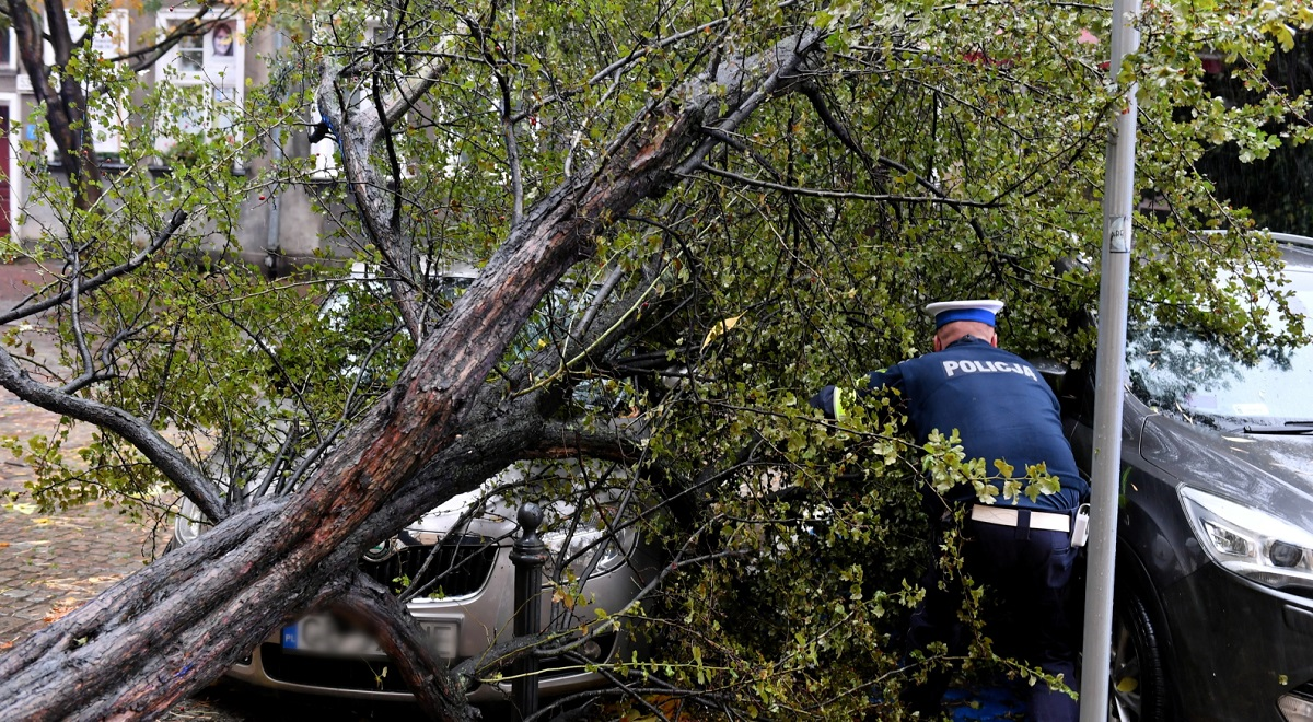 Vehicles damaged by a fallen tree in the northwestern Polish city of Szczecin on Wednesday.