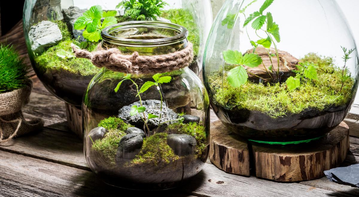 Marzy Ci Się Ogród Możesz Mieć Go W Słoiku Czwórka