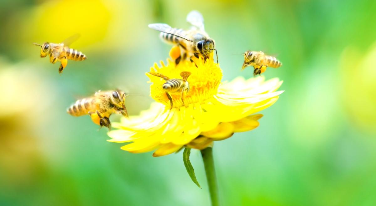 pszczoły_1200.jpg