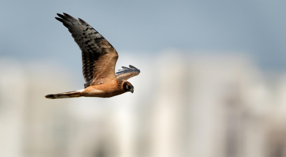 Ornitolog Coraz Więcej Ptaków Zostaje W Polsce Na Zimę Nauka