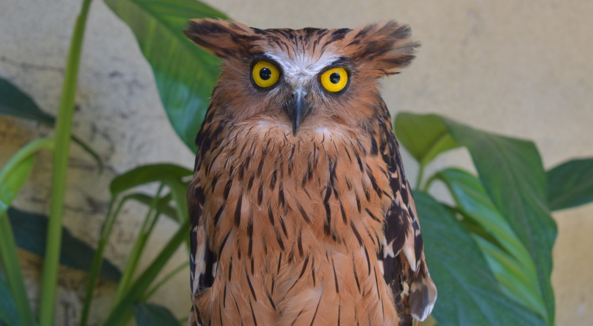 Sowy podobne do ludzi, jako jedyne ptaki mają twarz - Jedynka ...