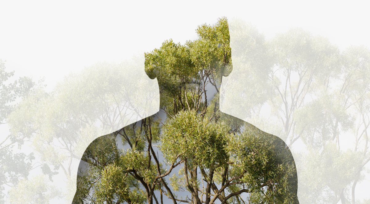 człowiek przyroda drzewa las ekologia 1200.jpg