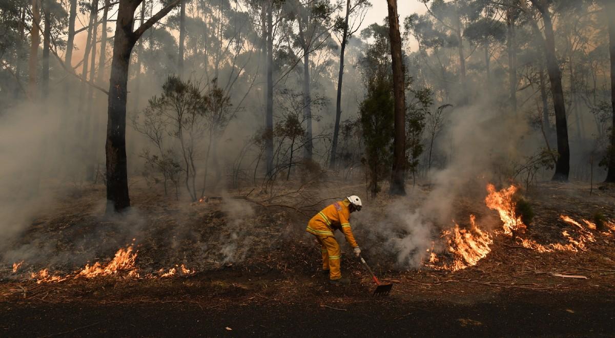 Ogromne Pożary Pustoszą Wyspę Kangura Ogień Strawił 155 Tys