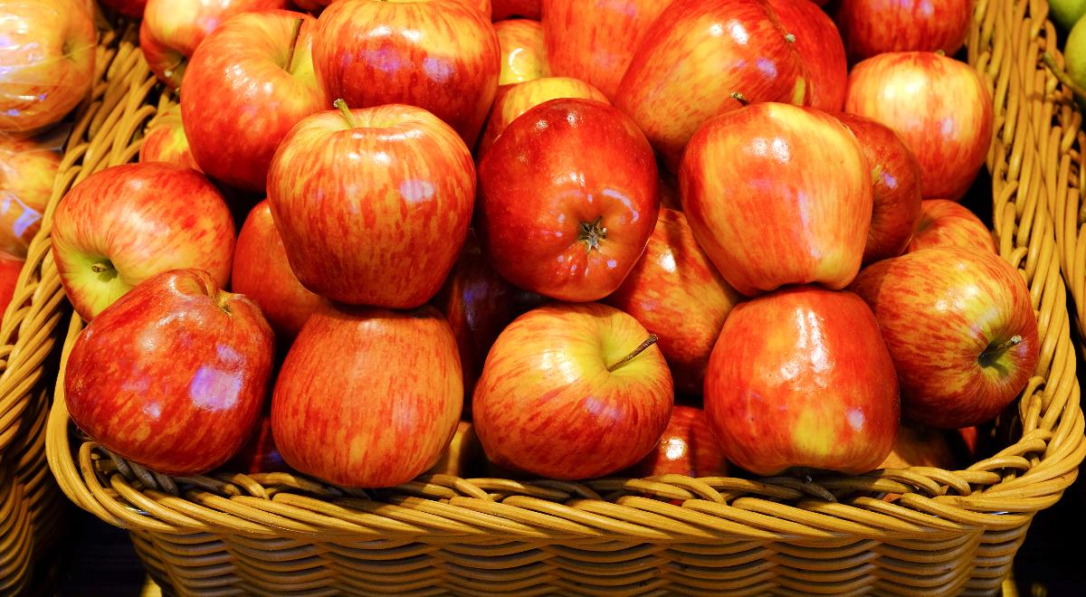 oferować rabaty duża obniżka najniższa cena W tym roku w Polsce będą rekordowe zbiory jabłek ...