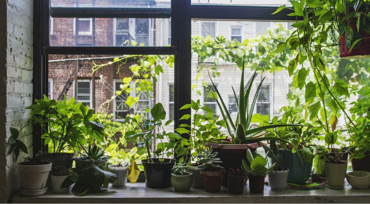 shutterstock rośliny dom 1200.jpg