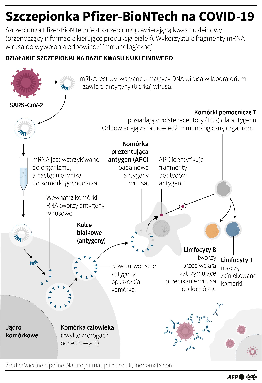 Szczepionka Pfizer-BioNTech na COVID-19 (opr. Maciej Zieliński/PAP/AFP)