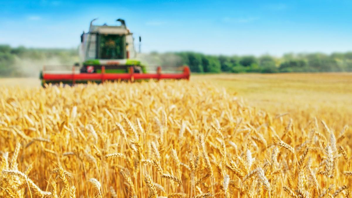 rolnictwo zboże kombajn shutterstock_1244988253 1200.jpg