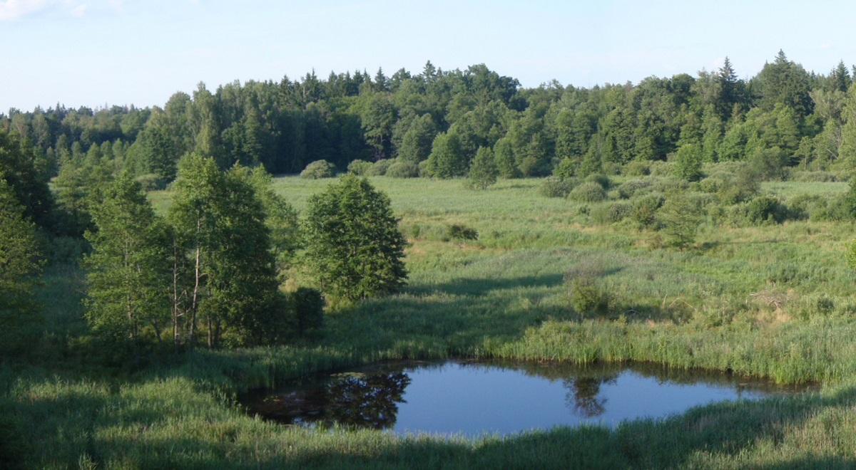 Białowieski Park Narodowy jest jedynym polskim obiektem przyrodniczym, wpisanym na listę Światowego Dziedzictwa UNESCO.