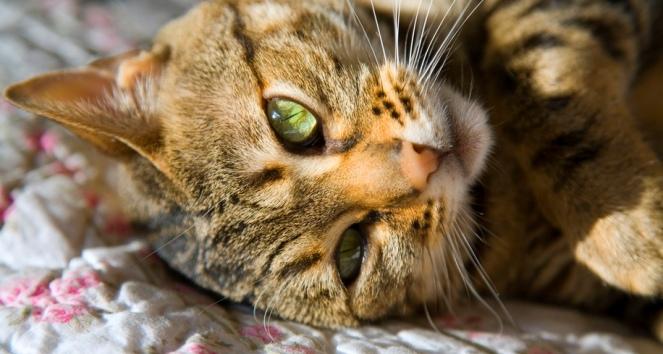 Czy Koty Rzeczywiście Boją Się Wody Czwórka Polskieradiopl
