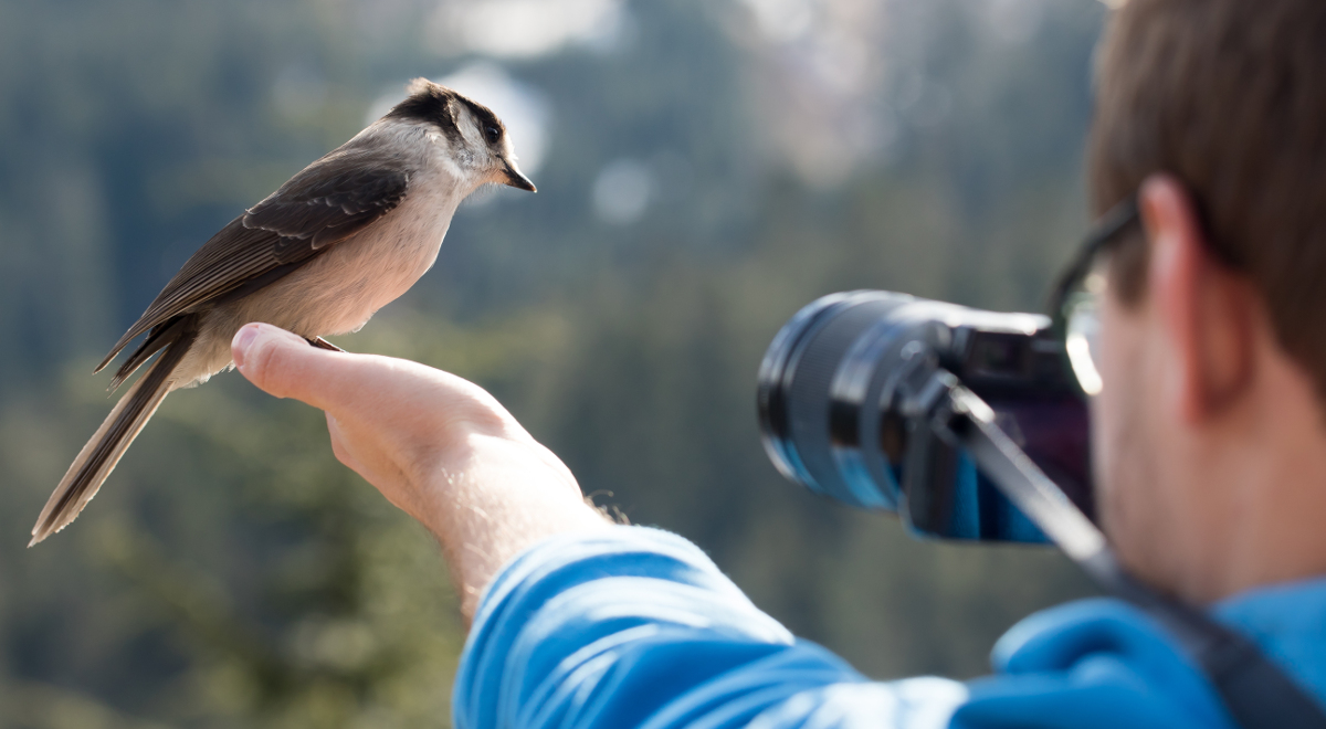 shutterstock ptak fotograf 1200.jpg