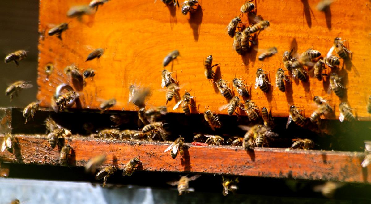 pszczoły pszczoła ule 1200.jpg