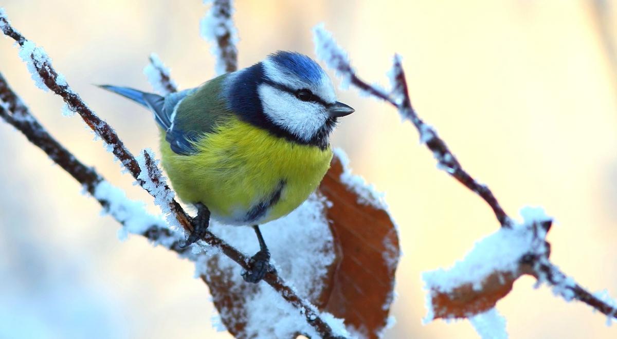 Jak Zwierzęta Przygotowują Się Do Zimy Jedne Tyją Inne
