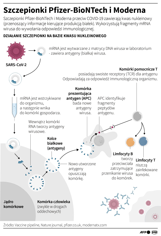 Obie szczepionki - zarówno firmy Moderna, jak i Pfizera oraz BioNTech - działają w taki sam sposób. Zawierają tzw. matrycowy kwas rybonukleinowy (mRNA) kodujący białko z otoczki osłonowej koronawirusa SARS-CoV-2 (opr. Maciej Zieliński/PAP)